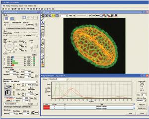 Olympus_Fig-1_pollen-2.jpg