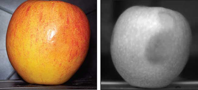 SWIR image, right, shows bruises that are hidden by the natural coloring of the apple.