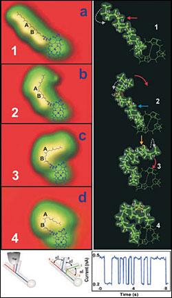 chlorophyll_switch.jpg