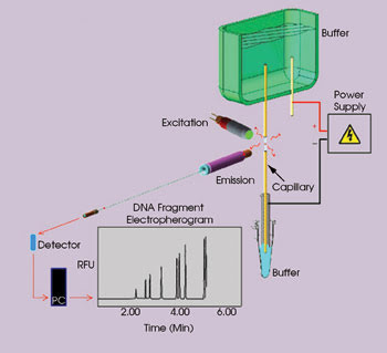 biophotonics research papers