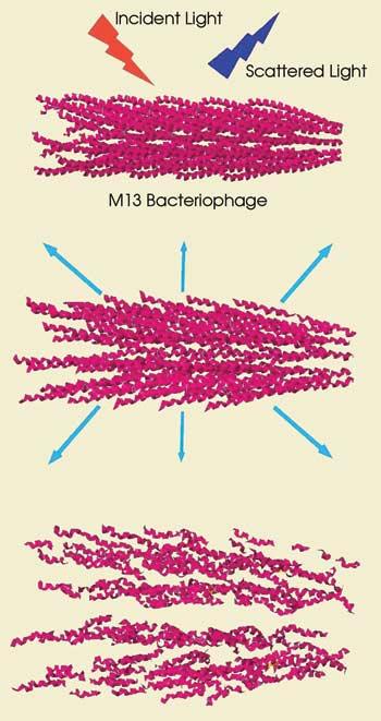 BNBlood_Bacteriophage.jpg