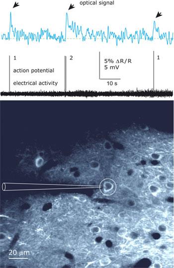 Max-Planck-Optical-Signal.jpg