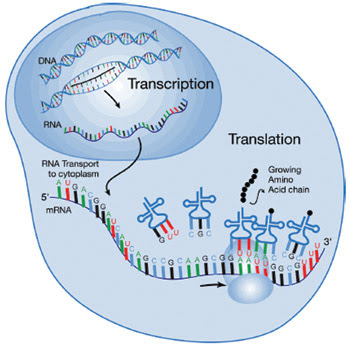 PCR-Feat_Fig-3_CentralDogma.jpg