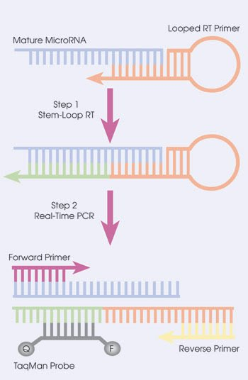PCR-Feat_Fig-5.jpg