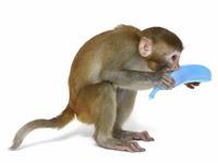 iStock_monkeyblue_Large.jpg