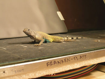 AsWeLizard-on-Forceplate.jpg