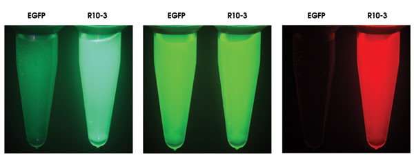 green fluorescent protein research papers 178 research paper engineering green fluorescent protein for improved brightness, longer wavelengths and fluorescence resonance energy transfer roger heim and roger y.