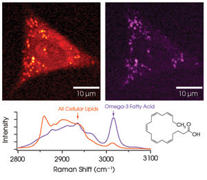 SNmolecules_Fig1.jpg