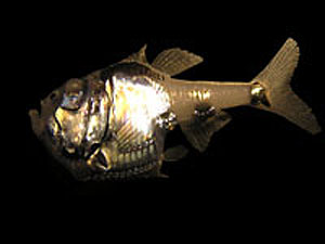 SilverHatchetfish.jpg