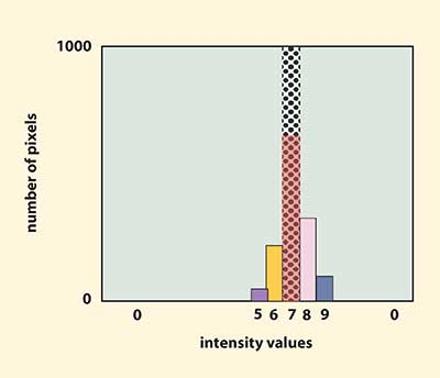 Area histograms can be used to evaluate average area uniformity.
