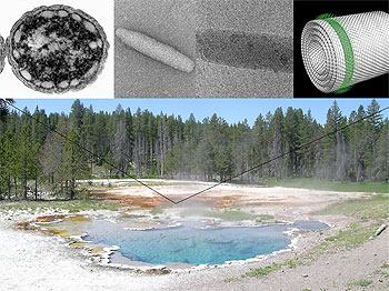 Green-bacteria-Yellowstone.jpg