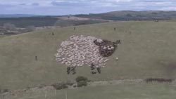 sheep_image3.jpg