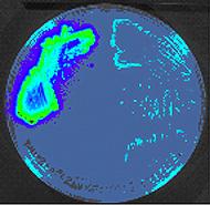 Lit.Bacteria.Fig.1.jpg