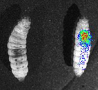 Lit.Bacteria.Fig.2.jpg