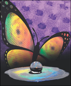 ShuYang's group at the University of Pennsylvania has a new way of combining the structural color and superhydrophobicity that characterize butterfly wings into a new material.