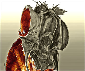Interior view of the fly's head in 3-D.