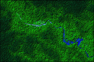 Graphic image of a small section of La Mosquitia rain forest in Honduras using X-Y-Z coordinates derived from lidar observations.