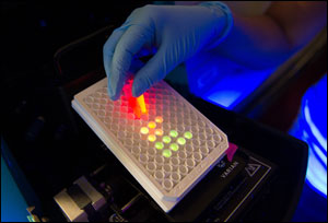 Nanorods created with firefly enzymes glow in a test tube.