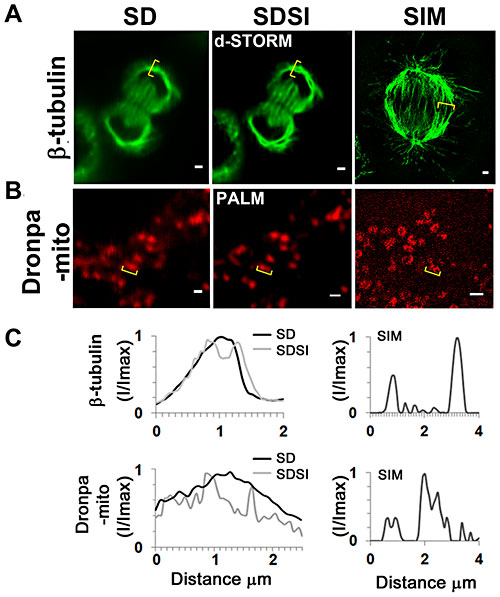 Comparison between single channel SDSI superresolution imaging and SIM imaging in a medial plane of HeLa cells. (A) Comparison of SD, SDSI-dSTORM and SIM images of the mitotic spindle, the spindle was visualized using ß-tubulin antibodies. Secondary Fab fragment antibodies conjugated to AlexaFluor647 were used for dSTORM imaging. SR data was generated using 3rd order SOFI, bar = 1 µm. (B) Comparison of SD, SDSI-dSTORM and SIM images of the mitochondria, the mitochondria were visualised by transfecting cells using the Dronpa-Mito construct for PALM imaging, SR data was generated using 3rd order SOFI, bar = 1 µm. (C) Line-scans (indicated in yellow parenthesis) through the mitotic spindle and mitochondria comparing SD resolution with SDSI and SIM.