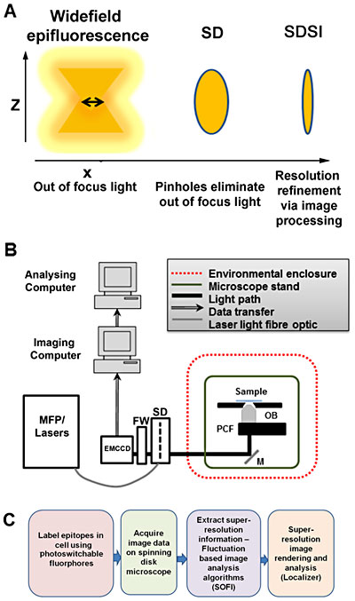 Setup of spinning disk stochastic imaging (SDSI) system and evaluation of imaging capabilities. (A) Schematic diagram describing how the point spread function is refined in a selected axial plane by spinning disk confocal microscopy and superresolution image processing. (B) Diagram showing the configuration of the SDSI microscope, abbreviations are as follows: EMCCD = Electron multiplied charge-coupled device camera. FW = Filter wheel. SD = Yokagawa CSUX1 spinning disk, M = mirror. PCF = Piezo-coupled focus feedback unit. OB = Objective. (C) Workflow of the SDSI experiments used in this paper, Briefly samples are prepared with probes for either PALM or dSTORM, next samples are imaged and finally SR data is generated using the SOFI image processing algorithm.