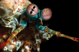 Sea Creature