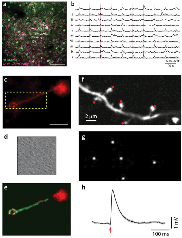 Holographic targeting of neurons.
