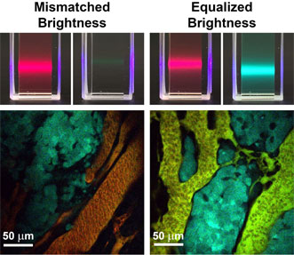 Conventional fluorescent materials like quantum dots and dyes