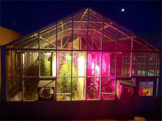Tomato plants received supplemental lighting from high-pressure sodium lamps or from intracanopy LED towers.