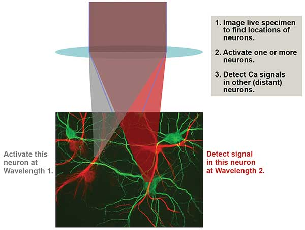 An advanced optogenetics experimental scenario involves MPE imaging to map the neurons
