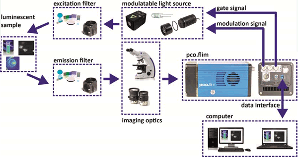 Structural overview of a set-up for luminescence lifetime imaging with a pco.flim camera system.