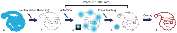 Principles of STORM microscopy: (a) A wide-field fluorescence image (blue area) is observed from overlapped fluorophores in a small target structure (gray lines); (b) no or little fluorescence is left after pre-acquisition bleaching with an appropriate laser; (c) individual fluorophores are sparsely activated by an activation laser and then emit fluorescence (blue spots) after applying an excitation laser (usually the same one for pre-acquisition bleaching).