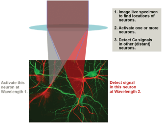 An advanced optogenetics experimental scenario involves MPE imaging to map the neurons, followed by activation of one or more neurons using MPE at Wavelength 1 and probing of Ca2+ activity in remote neurons by multiphoton excitation at Wavelength 2.