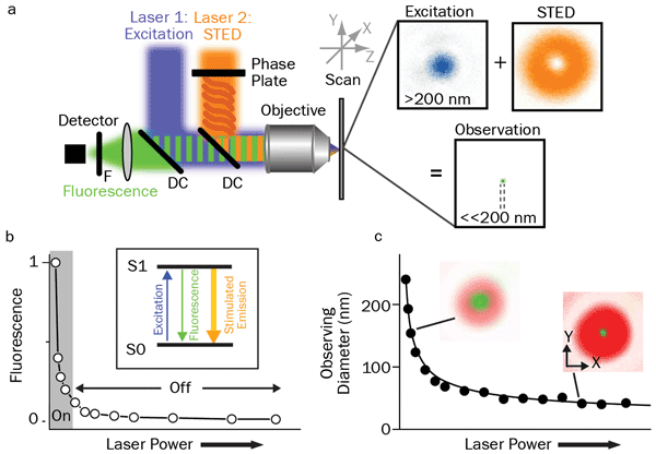Principles of STED: (<b>a</b>) Schematic drawing of the setup of a STED nanoscope with phase plate, objective lens dichroic mirror (DC), fluorescence filter (F), detector, scanning device, and excitation and STED lasers with their focal intensity distribution (right) and a representative, subdiffraction-sized observation area.