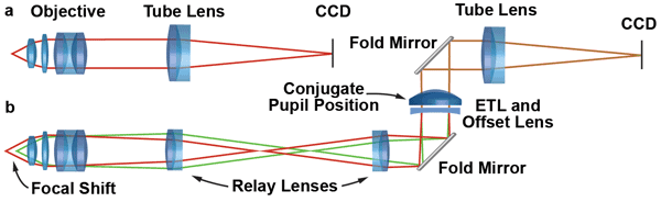 In a microscope with infinity-corrected optics, the image is formed by the objective and tube lens.