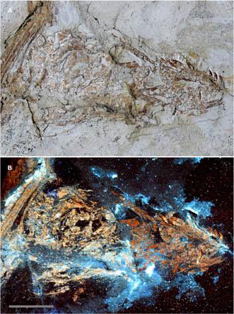 Microraptor skull
