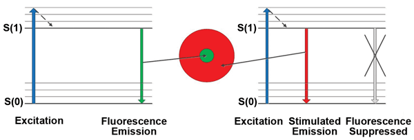 Simplified Jablonski energy-level diagrams for the center-fluorescing region (left portion of the diagram) and the donut-shaped region (right portion), where fluorescence is suppressed by stimulated emission.