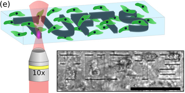 laser-based micropatterning of silk hydrogels