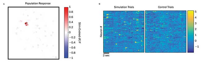 Results from a test study of holographic photostimulation pyramidal neurons in the live brain of a mouse during an active treadmill study.