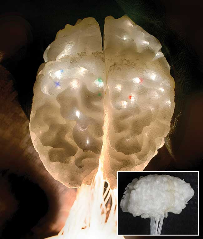 Example images of the illuminated illustrative brain model.