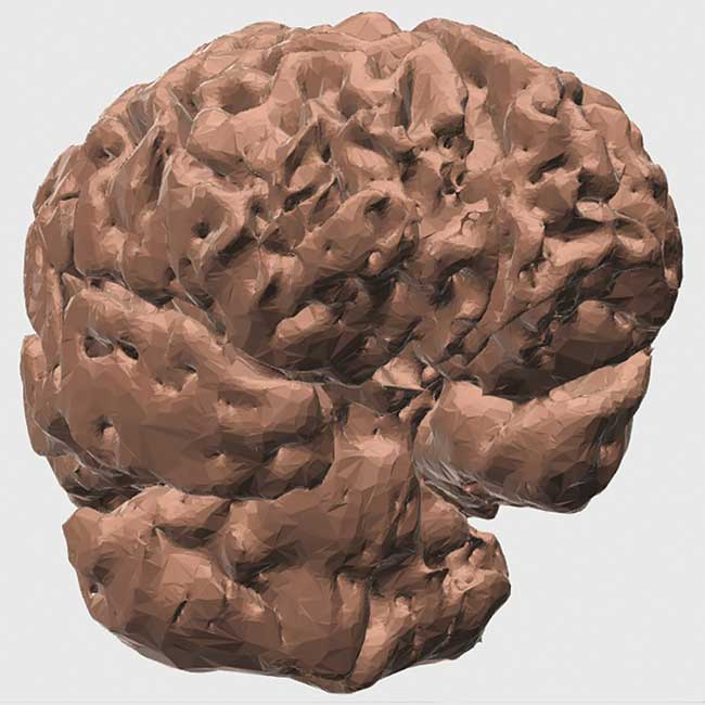 The 3D computer brain model used to make the 3D-printed illuminated brain model.