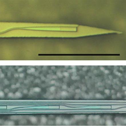 Caltech Optical Probe for Deep Brain Imaging