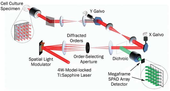 Operational schematic of the multifocal multiphoton system.