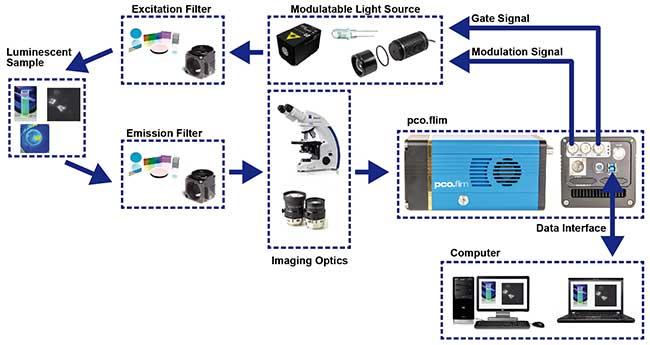 Structural overview of a suggested setup for luminescence lifetime imaging using a PCO FLIM camera system.