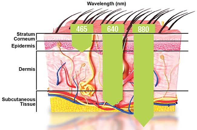 The wavelength of light used will determine the extent of penetration depth through the tissue.