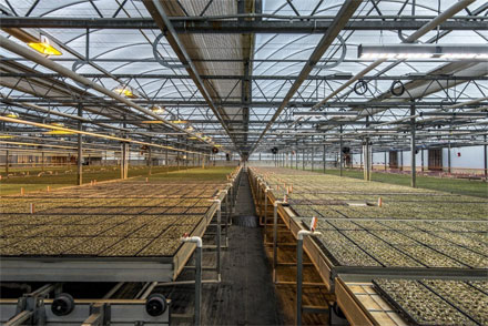 Organic herb producer, Shenandoah Growers has moved from high-pressure sodium lamps to HPS to Fluence VYPRx PLUS, an LED system by Fluence Bioengineering.