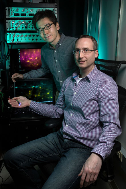Salk researchers (from left, Kohei Sekiguchi and Axel Nimmerjahn) have revealed what they say is the world's first imaging data on spinal cellular activity during behavior, enabled by miniaturized microscopes.