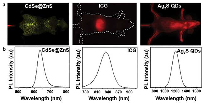 In vivo fluorescence images of CdSe/ZnS QDs, ICG (NIR-I), and Ag2S QDs (NIR-II) in nude mice.