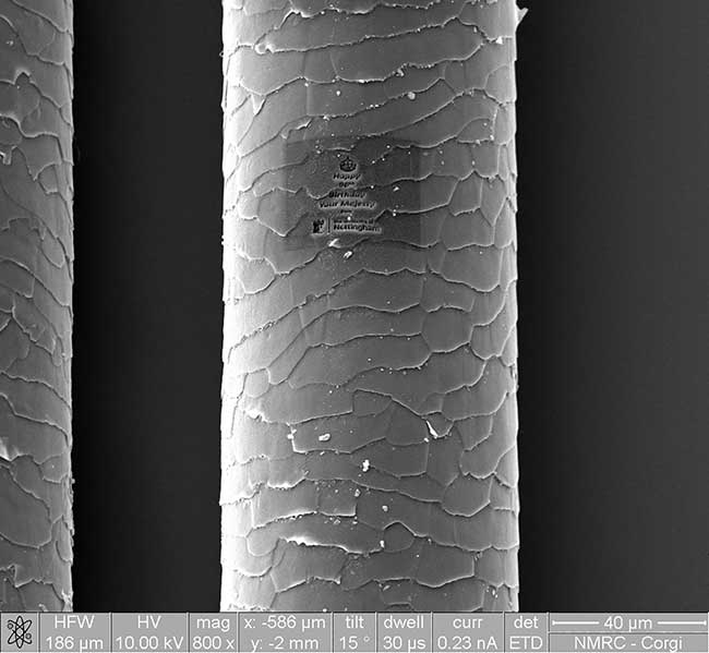 A corgi dog hair as imaged with microscopy technology at the University of Nottingham's new Nanoscale and Microscale Research Centre.