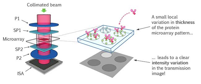 Scalable, point-of-care and label-free microarray platform for rapid detection of Sepsis (RAIS).