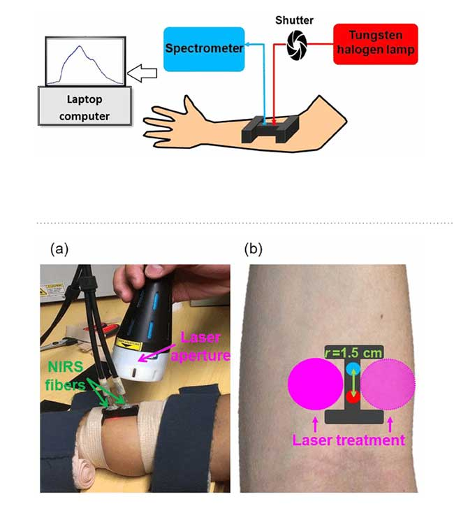 Experimental setup: (a) photograph of the laser aperture for LLLT/placebo treatment and bb-NIRS fiber holder on a participant's forearm.